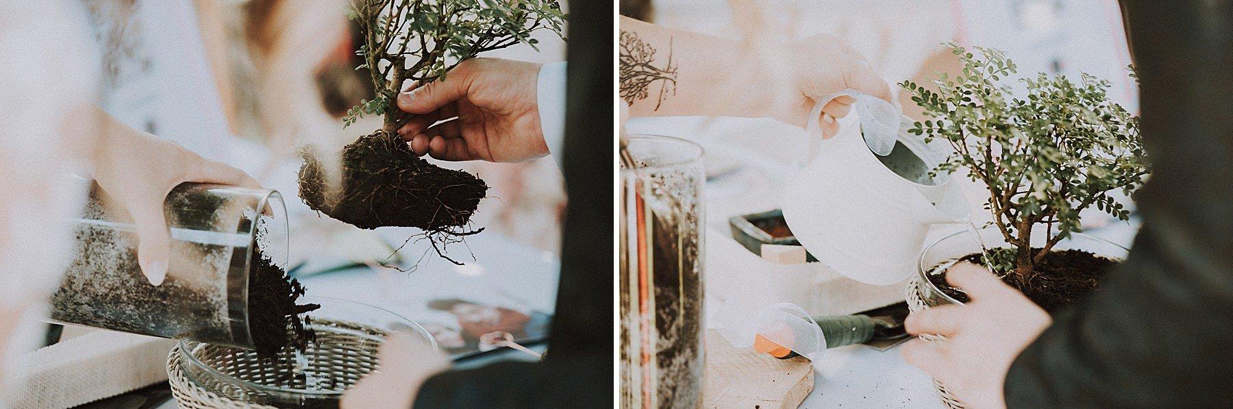sposi piantano bonsai