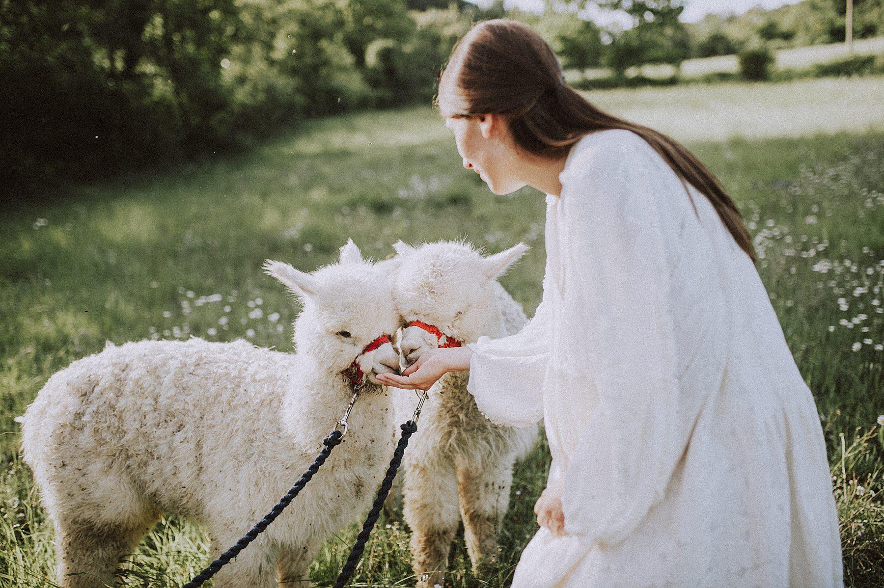 shooting fotografico per fidanzati nel mugello alpaca