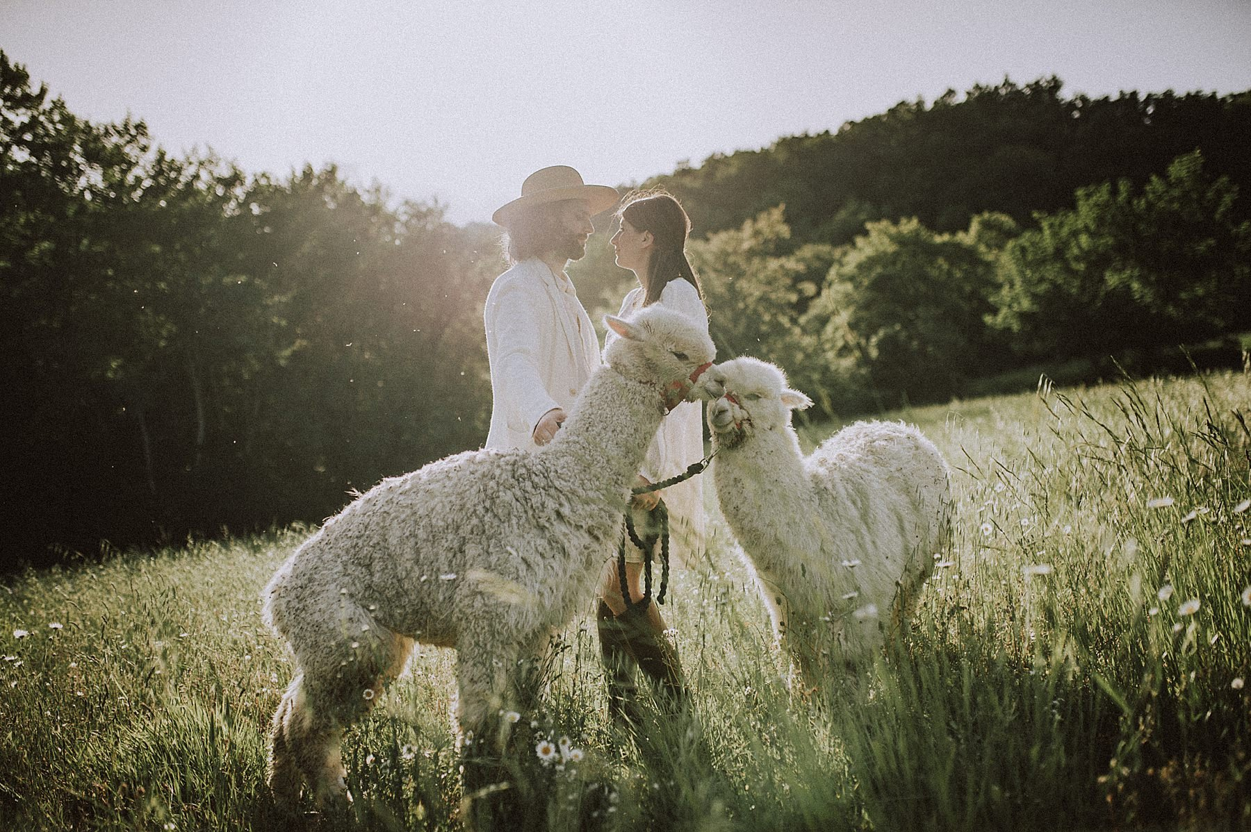shooting fotografico pre wedding nel mugello con alpaca