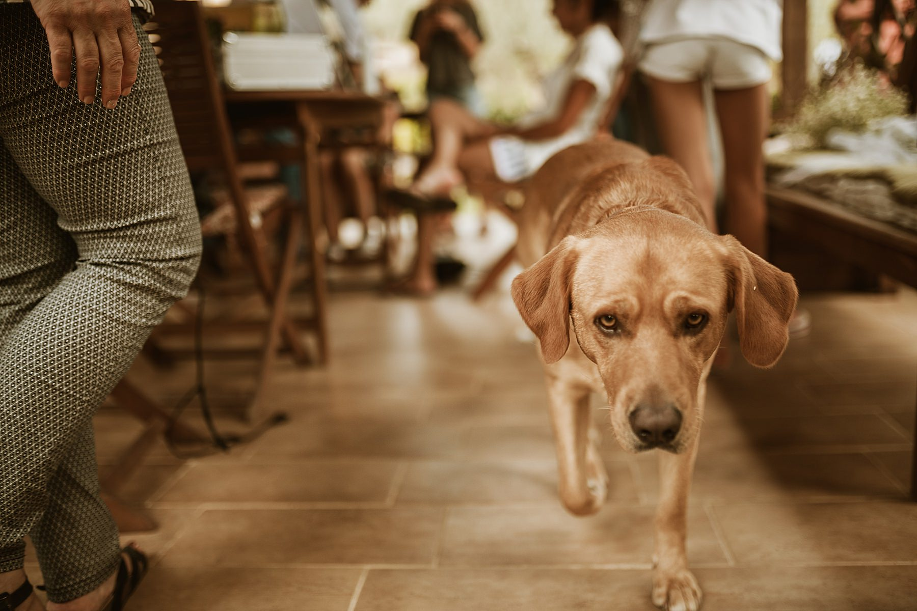 cane con sposa durante la preparazione
